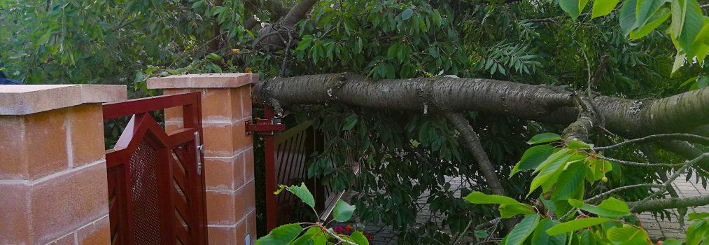 Baum über Straße